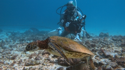 20110201-02アオウミガメの沖ちゃん