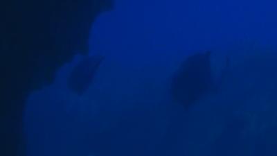 20110209-01ロウニンアジ