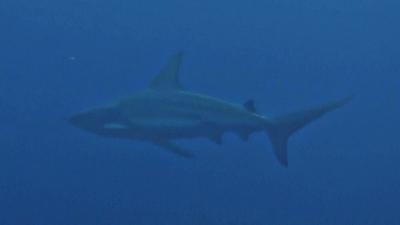 20110217-02カマストガリザメ