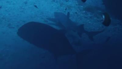 20110217-04ロウニンとサメ