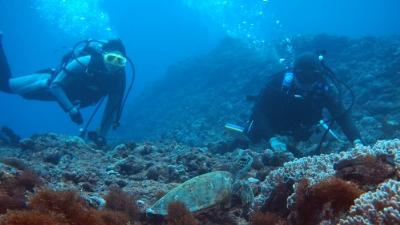 20110219-01アオウミガメとダイバー