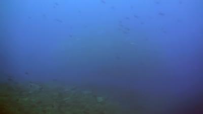 20110221-01ギンガメアジ