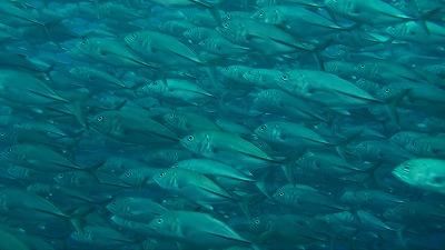 20110301144229(2)ギンガメ