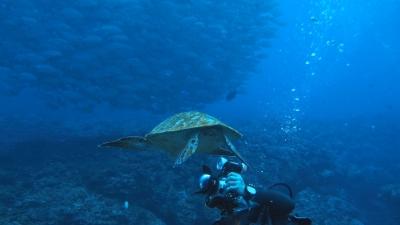 20110302-02ギンガメとカメ