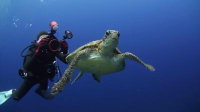 20110302-06アオウミガメ