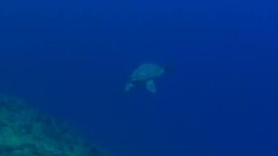 20110305-01アカウミガメ