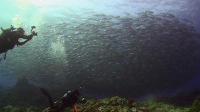 20110305-04浅場のギンガメ