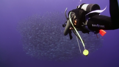 20110305-06ギンガメとダイバー