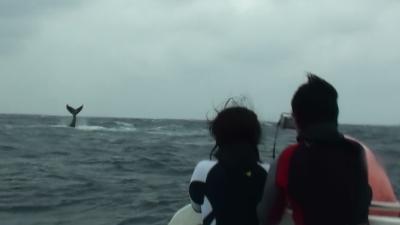 20110307-01クジラ