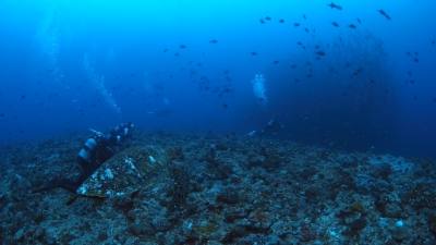 20110308-01アオウミガメの銀ちゃん