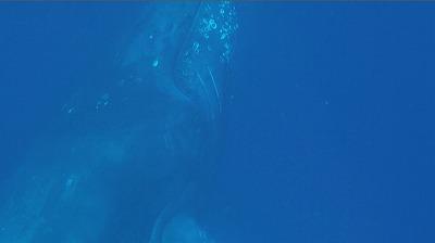 20110312-02ザトウクジラの顔
