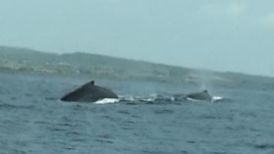 20110314-01ザトウクジラ