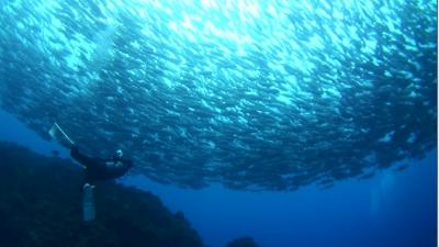 20110315-04ギンガメアジ