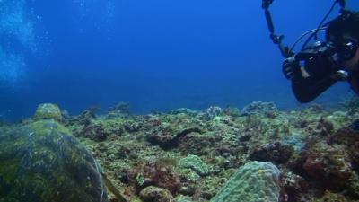 20110319-01アオウミガメ
