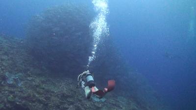 20110327-01ギンガメアジ