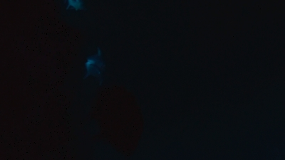 20110328-01ロウニンアジ