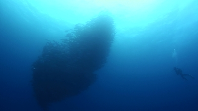 20110329-04ギンガメアジ