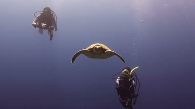 20110330-01アオウミガメの銀ちゃん