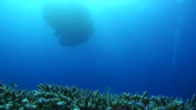 20110403-03サンゴとギンガメトルネード