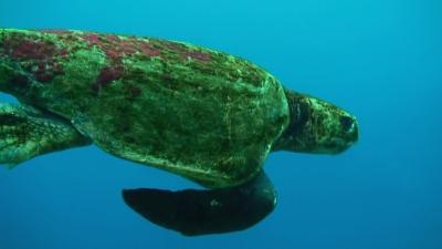 20110417-03アカウミガメ