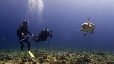 20110419-02アカウミガメ