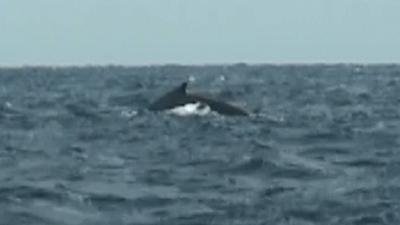 20110423-02クジラ
