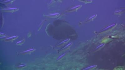 20110423-08ナポレオン