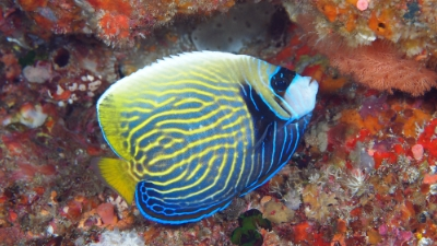 20110428-05タテキン若魚