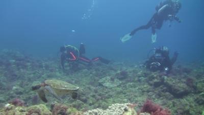 20110502-03アオウミガメ