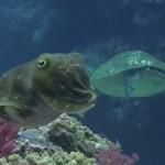 ギンガメ、イソマグロの大群や「コブシメの珍事件?」