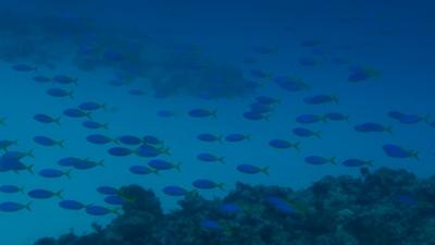 20120116-06ウメイロモドキの大群