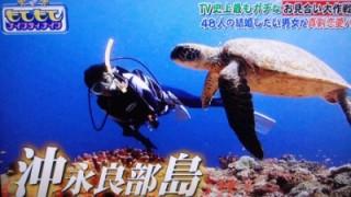 お見合いTV沖永良部島 (ナインティナイン)