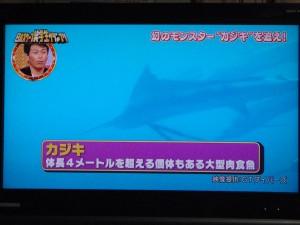 「日本スクープ笑学生グランプリ」 カジキの映像