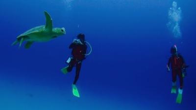 20120212-05アカウミガメ