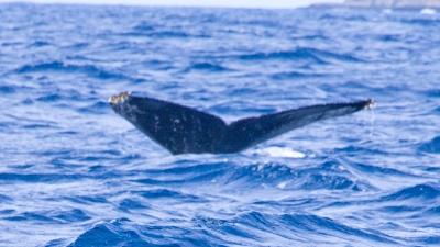 20120213-01ザトウクジラ