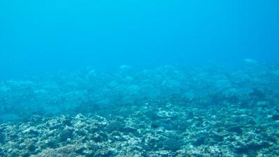 20120217-06ギンガメアジ