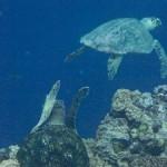 ギンガメとウミガメのパラダイス!