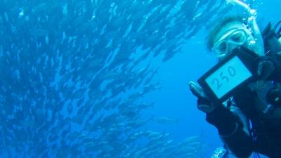 20120219-06ギンガメアジの大群