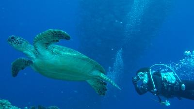 20120220-05ギンガメとウミガメとダイバー