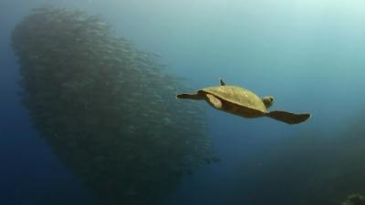 20120229-01ギンガメ&アオウミガメ