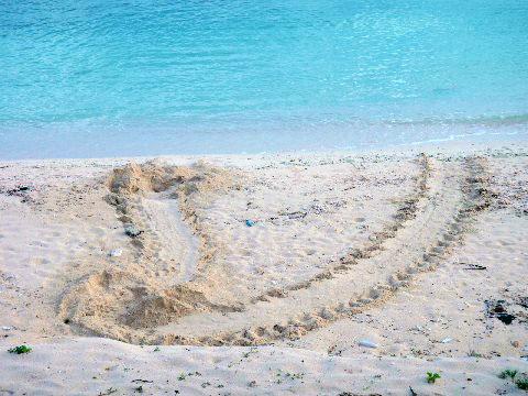 ウミガメの足跡1