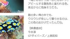 2013年5月7日 日本テレビ 「いのちのいろいろ」