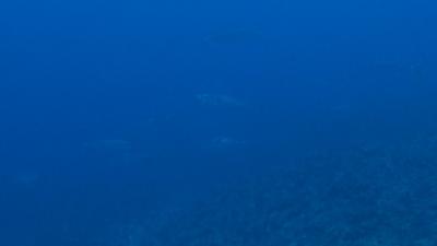 20120301-01イソマグロの大群