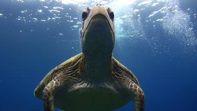 20120301-04アオウミガメの銀ちゃん