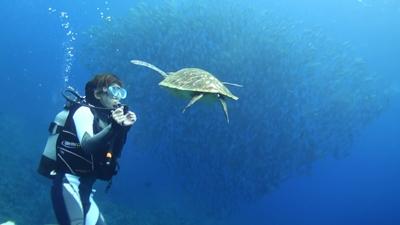 20120301-06アオウミガメとギンガメ