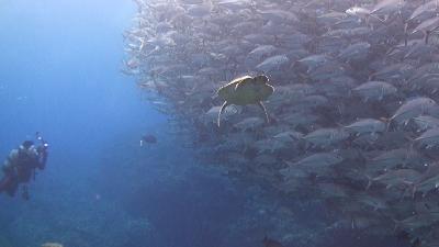 20120303-02ギンガメと銀ちゃん