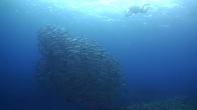 20120303-03ギンガメトルネードの撮影