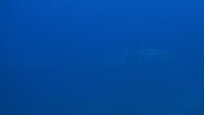 20120307-01イソマグロの群れ