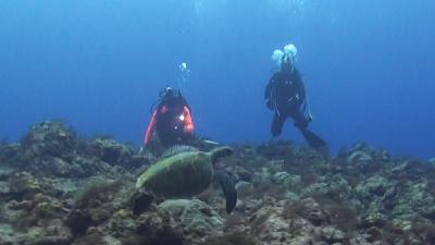 20120308-01アオウミガメ