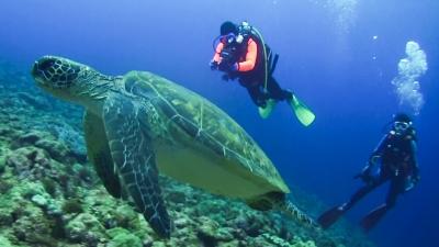 20120309-04アオウミガメのウタちゃん